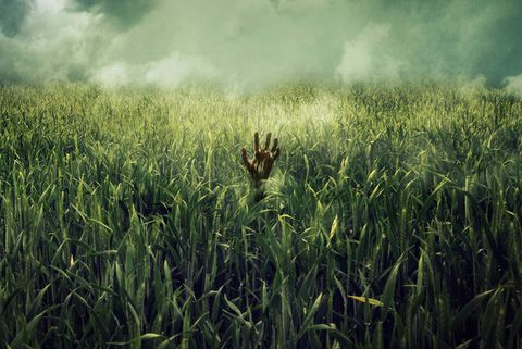Agrostophobia: The Fear of Grasses