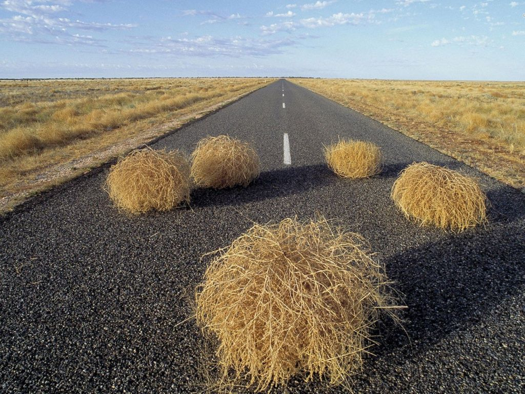 The fear of Tumbleweeds: Grasartophobia